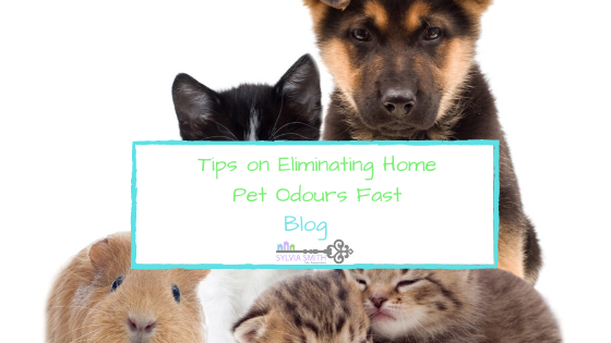 Tips on Eliminating Home Pet Odours Fast